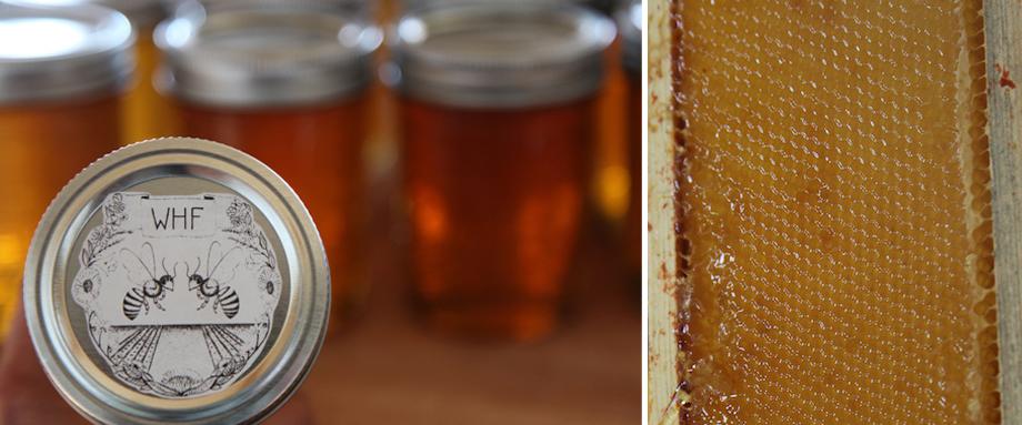 WHF Honey