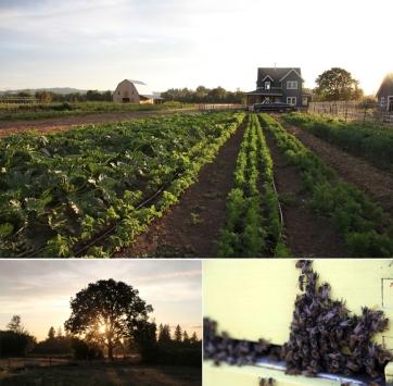 farmsettings