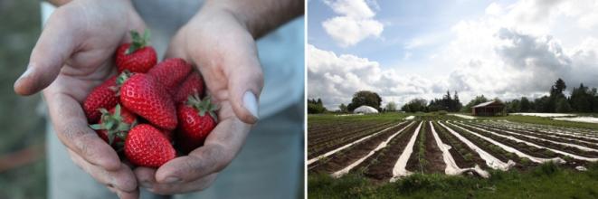 strawberryfieldsforever