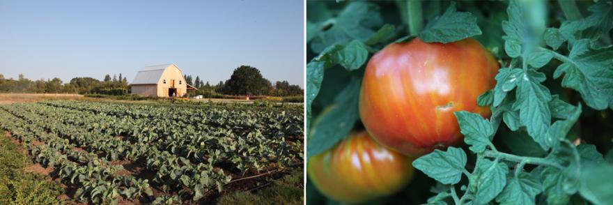 tomatofallcrops