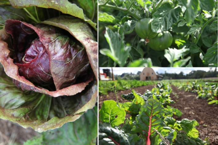 veggies5b
