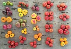 tomatonames