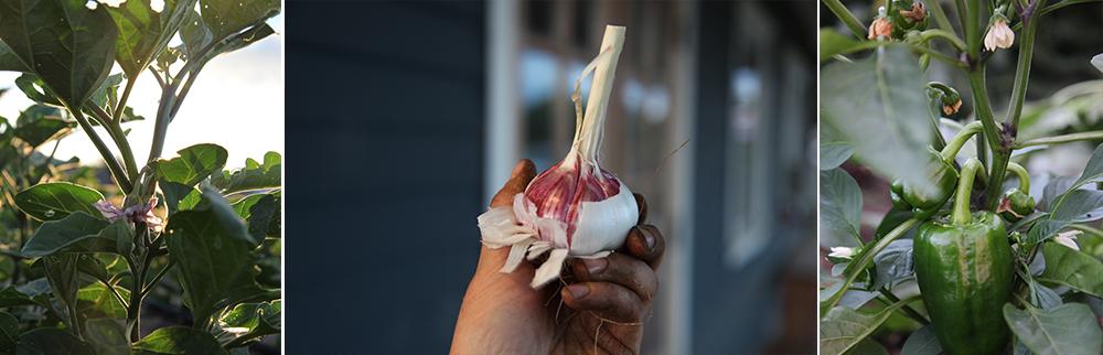 garlicsolan