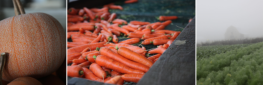 carrotsfog