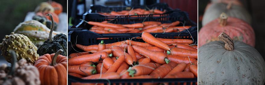 carrotssquash