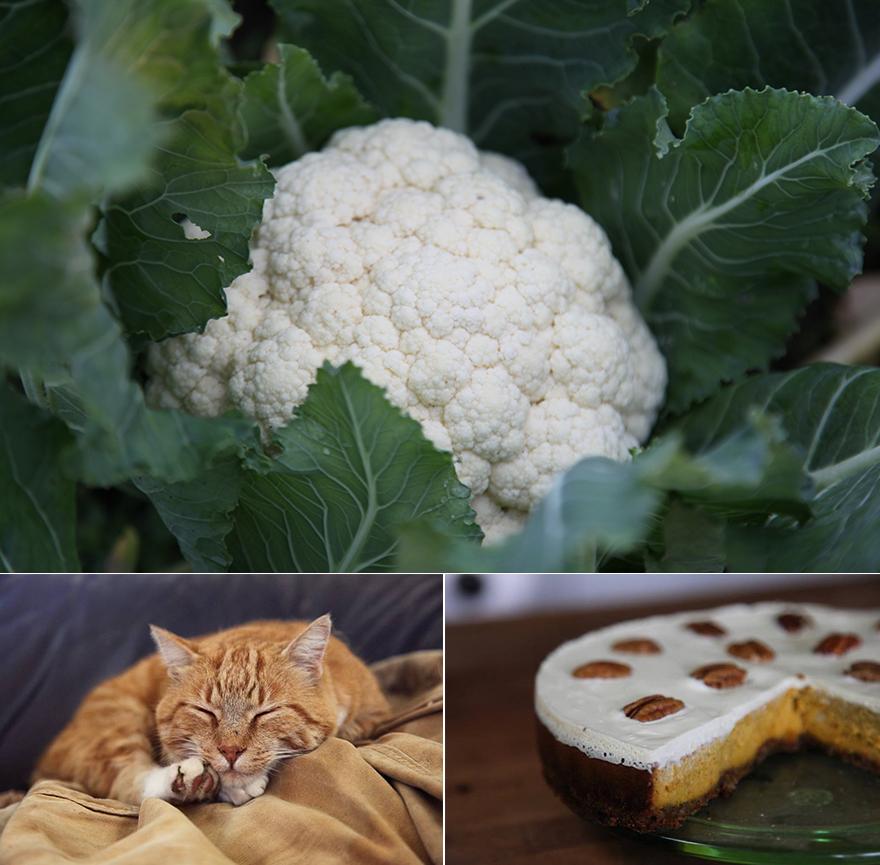 pumpkincauli